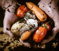 Organic Gardening Tips For New Gardeners