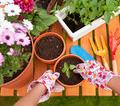 Organic Gardening: Growing Vegetables at Home