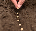 Organic Gardening – Going Green in Your Garden
