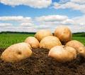 Organic Gardening – Preparing Your Garden Soil For Planting