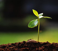Five Simple Organic Gardening Tips