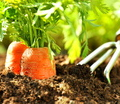 3 Tips For The Organic Garden