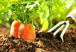 3 Tips For The Organic Garden