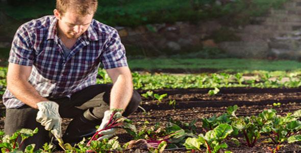 Organic Gardening Pest Control Tips