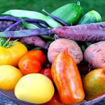 Organic Gardening 101 – Getting Started